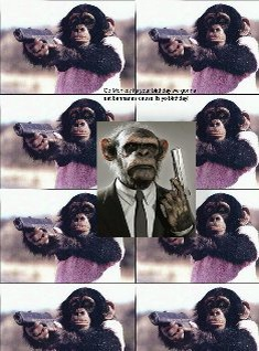 Monkey With a Gun Club