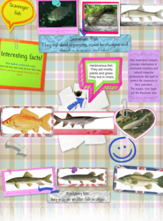 New GlogFish Project