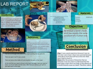 Lab report heart disection