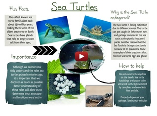 Sea Turtle Oceanography Project