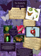 The Butterfly Life Cycle's thumbnail