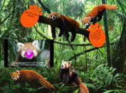 Save Red Panda's thumbnail