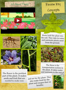 All About Plants 's thumbnail