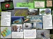 [2015] Tristan U. (6th Earth Science 2015): Tristan_Loss_of_Biodiversity's thumbnail