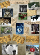 The Wolf's thumbnail
