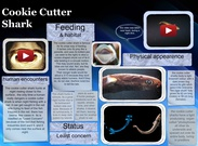 [2016] Lyndon M (LA 7): Cookie Cutter Shark's thumbnail