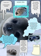 Weddell Seal's thumbnail