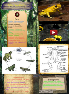 Golden Dart Frog- Science Project