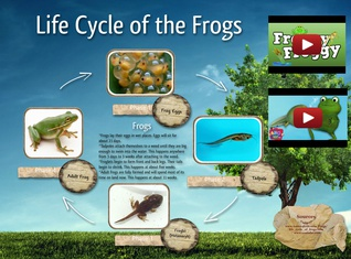 Life cycle of the Bugs