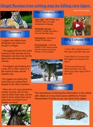 [2014] DENNIS POMAGER (Jardine 2014-15): Illegal Russian Tree Cutting May Be Killing Rare Tigers's thumbnail