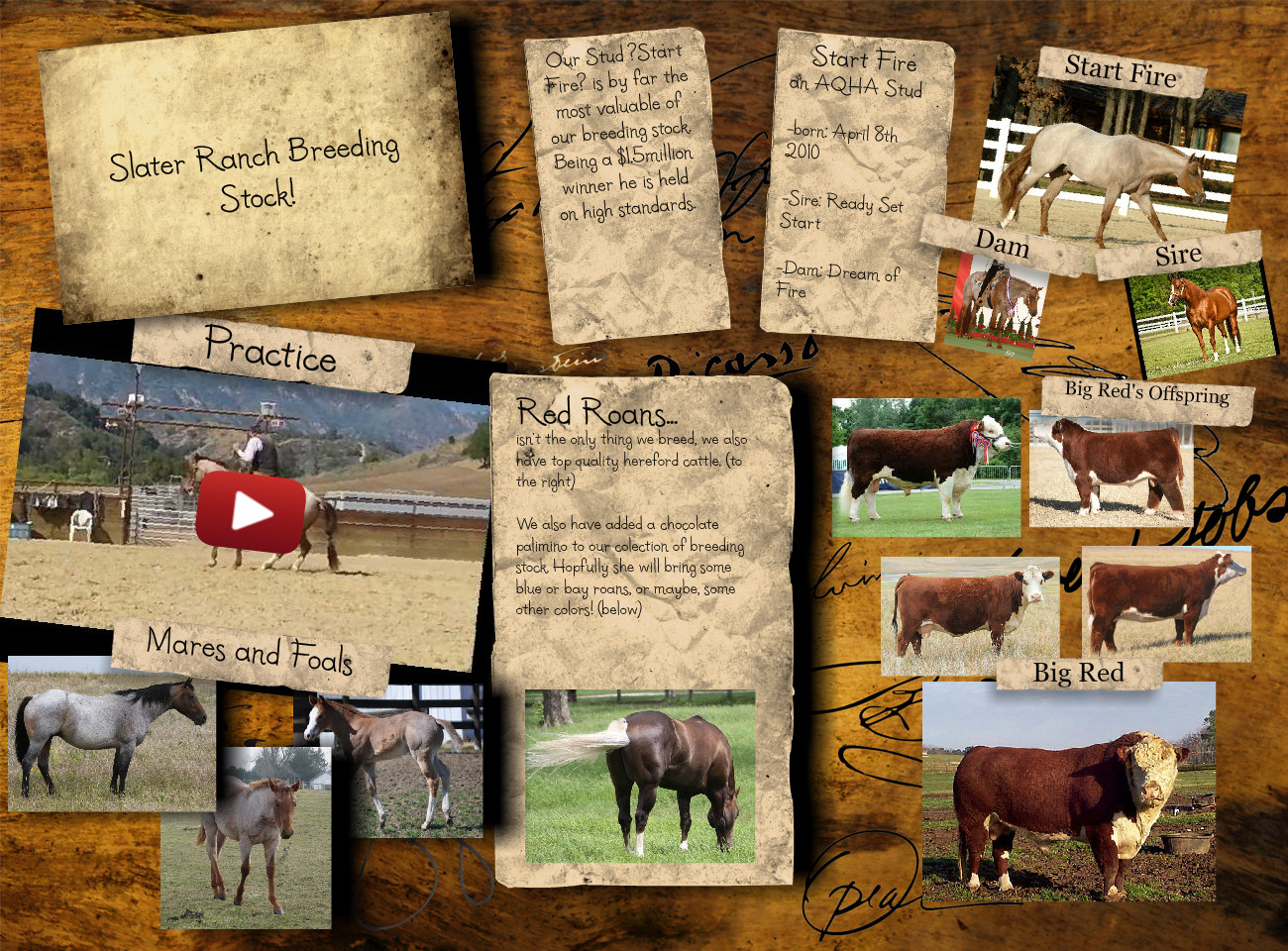 Slater ranch breeding stock