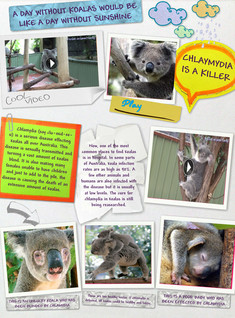 Koalas and Chlamydia