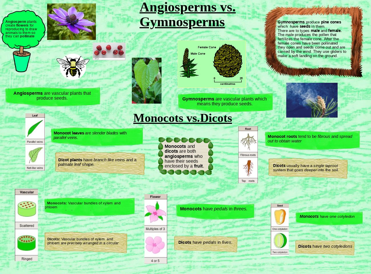 Angiosperms vs Gymnosperms & Monocots vs Dicots