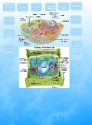 Cell Organelles's thumbnail