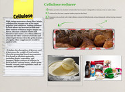 Cellulose (Additive or Preservative)'s thumbnail