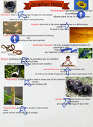 plant and animal adaptations's thumbnail