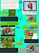 Butterfly Lifecycle thumbnail