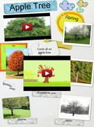 Apple Tree Life Cycle's thumbnail