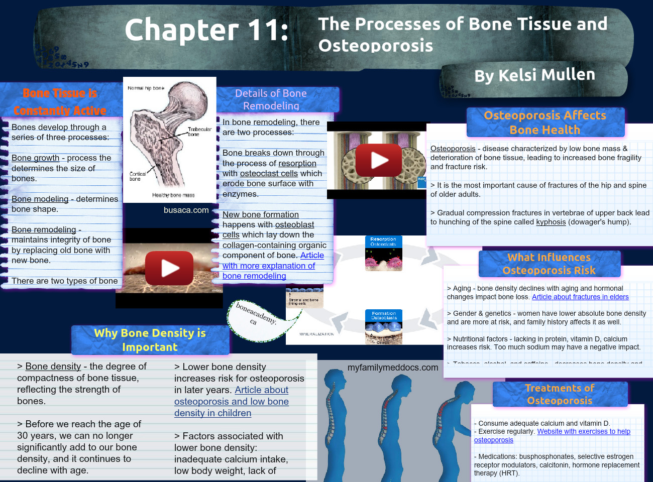 Chapter 11: Bones Tissue and Osteoporosis