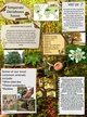 Temperate Deciduous Forests thumbnail
