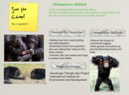 save the chimp's thumbnail