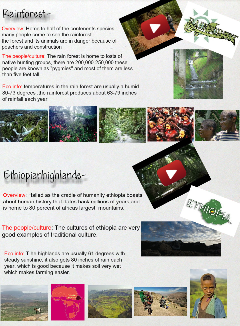 Rainforest Ethiopian Highlands Africa Ecosystems En Ethiopian