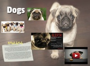 Dogs's thumbnail