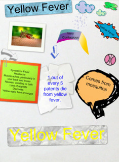 Yellow Fever Project